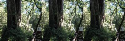 0707_forest_bigtree_lrl