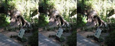 0707_forest_dragonphoenix_lrl