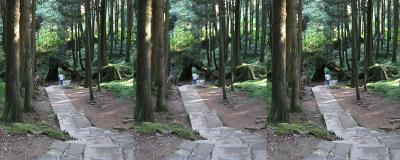 0707_forest_start_lrl