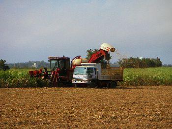harvest_daito